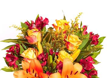 Bloom & Wild client testimonial